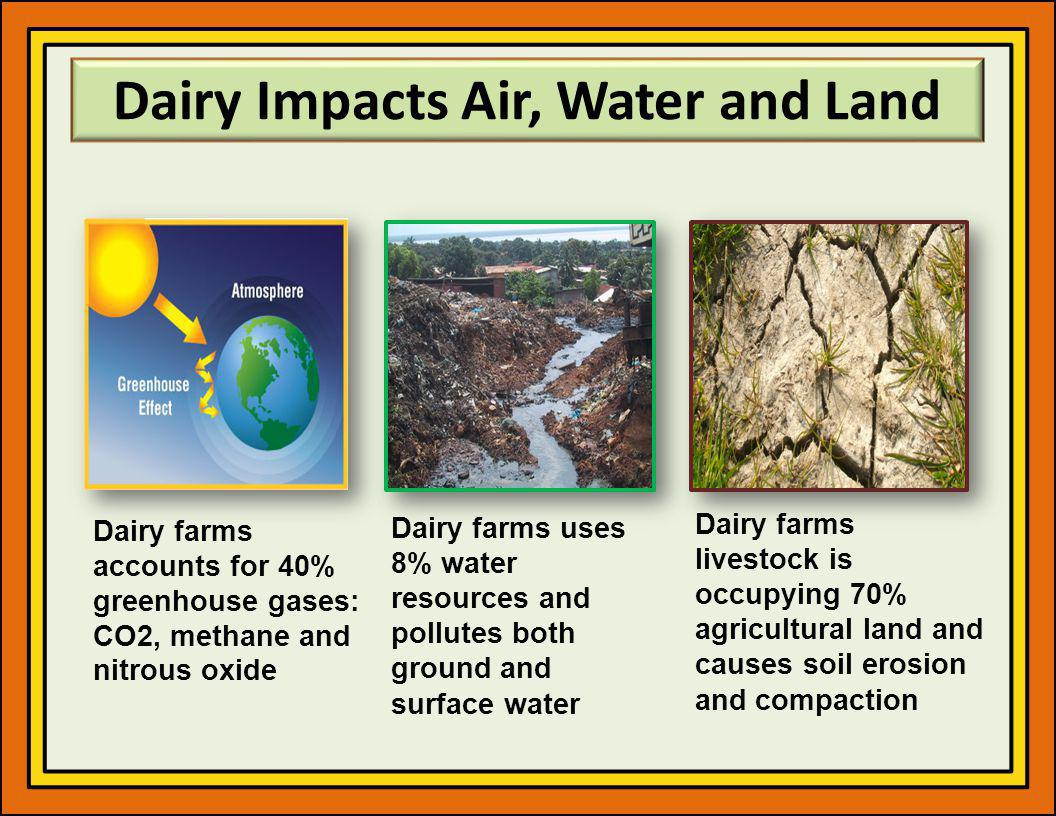 Dairy Impacts Air, Water and Land Dairy farms uses 8% water resources and pollutes both ground and surface water Dairy farms accounts for 40% greenhouse gases: CO2, methane and nitrous oxide Dairy farms livestock is occupying 70% agricultural land and causes soil erosion and compaction