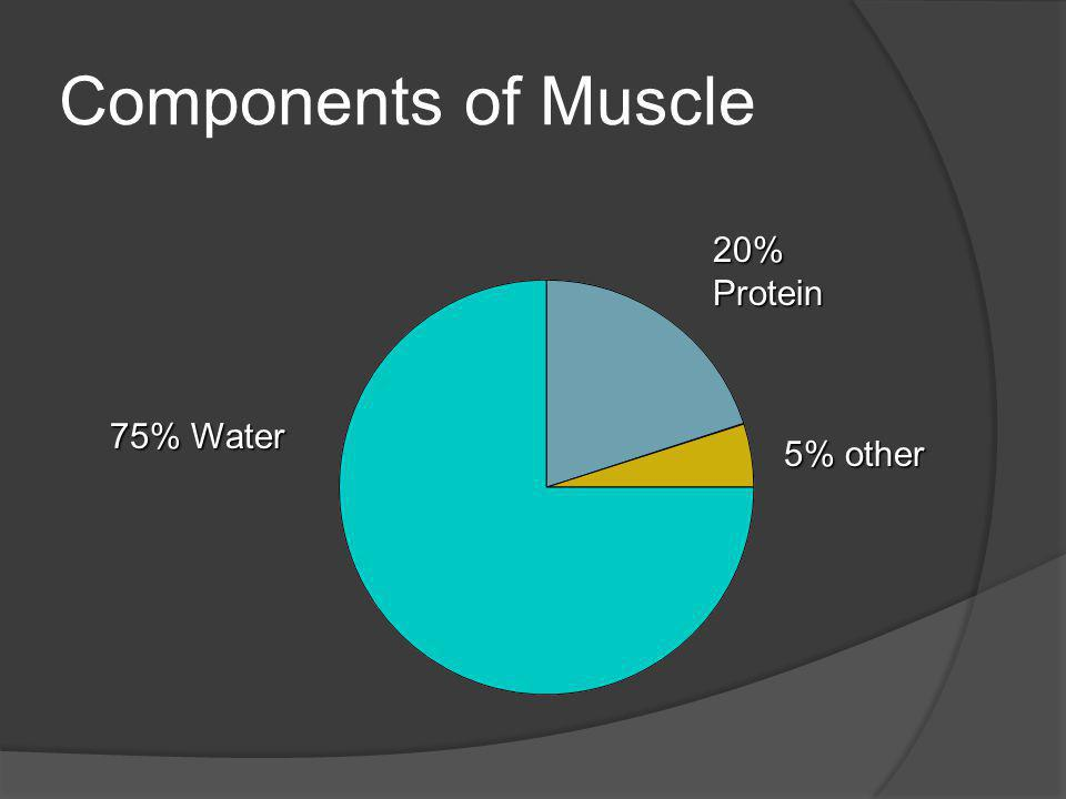 Components of Muscle 75% Water 20%Protein 5% other