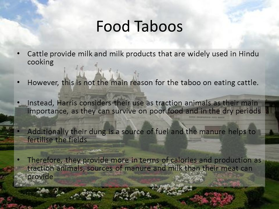 Food Taboos Cattle provide milk and milk products that are widely used in Hindu cooking However, this is not the main reason for the taboo on eating cattle.
