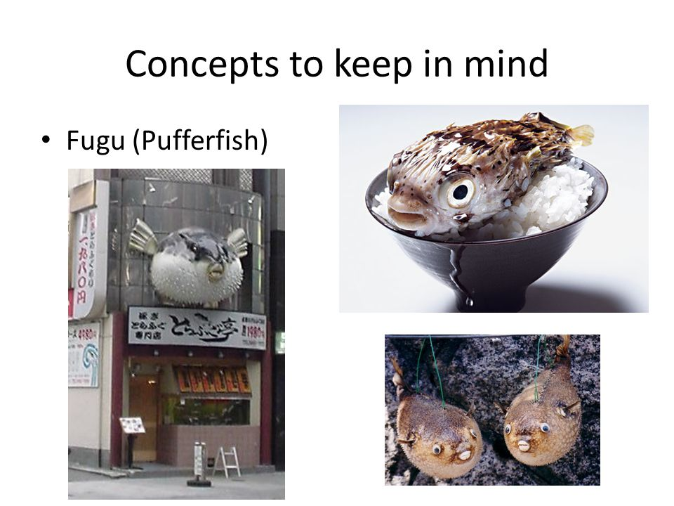 Concepts to keep in mind Fugu (Pufferfish)