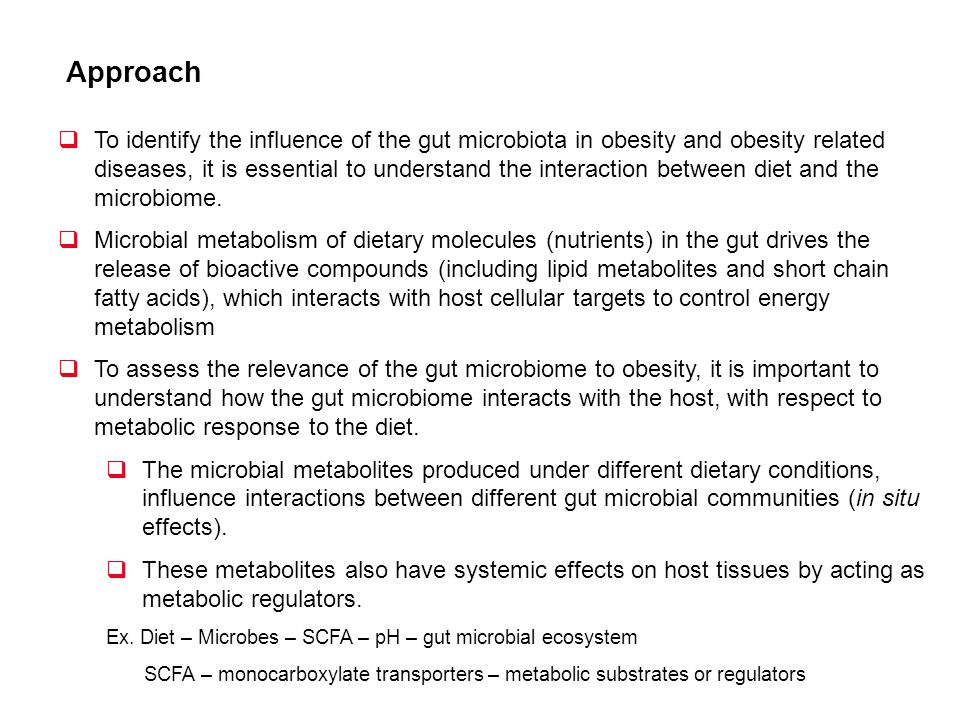 Approach To identify the influence of the gut microbiota in obesity and obesity related diseases, it is essential to understand the interaction betwee
