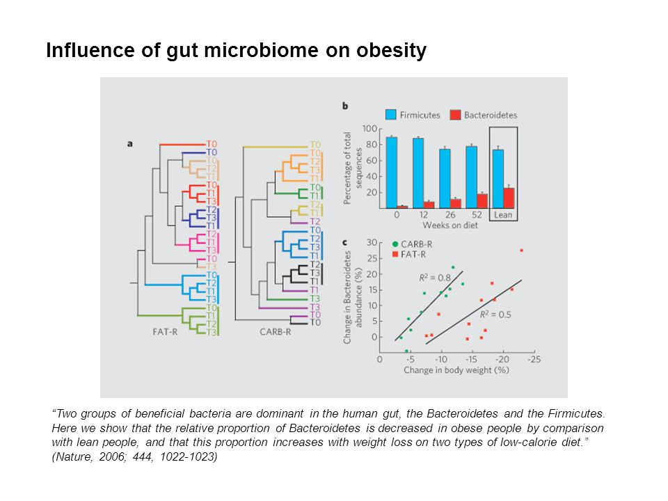 Influence of gut microbiome on obesity Two groups of beneficial bacteria are dominant in the human gut, the Bacteroidetes and the Firmicutes. Here we