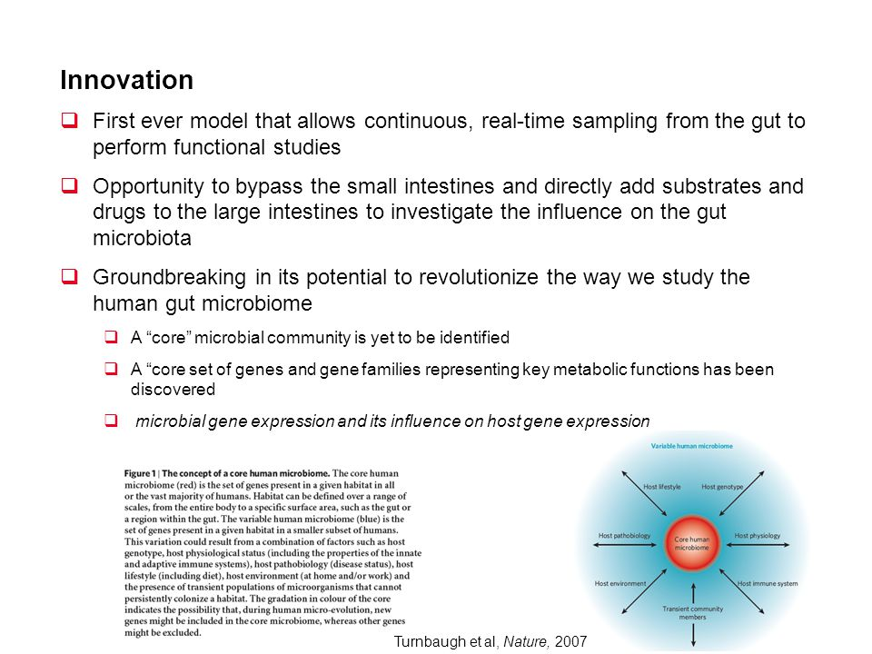 Innovation First ever model that allows continuous, real-time sampling from the gut to perform functional studies Opportunity to bypass the small inte