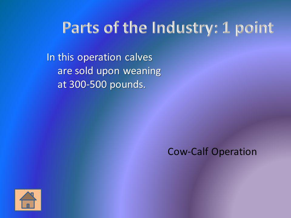 In this operation calves are sold upon weaning at 300-500 pounds. Cow-Calf Operation