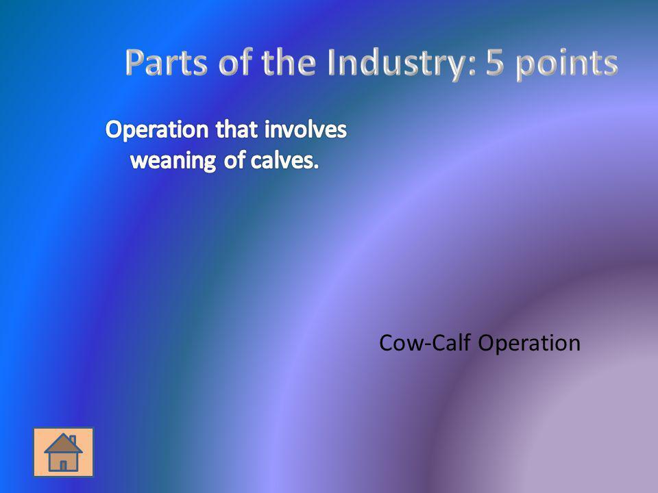 Cow-Calf Operation