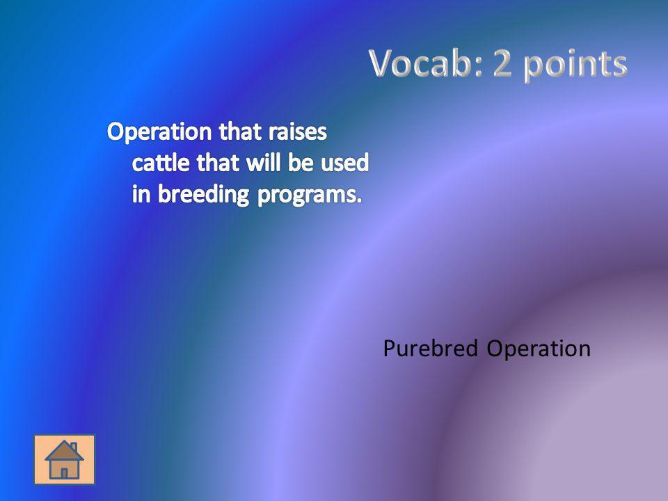 Purebred Operation