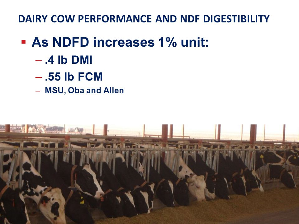 DAIRY COW PERFORMANCE AND NDF DIGESTIBILITY As NDFD increases 1% unit: –.4 lb DMI –.55 lb FCM –MSU, Oba and Allen