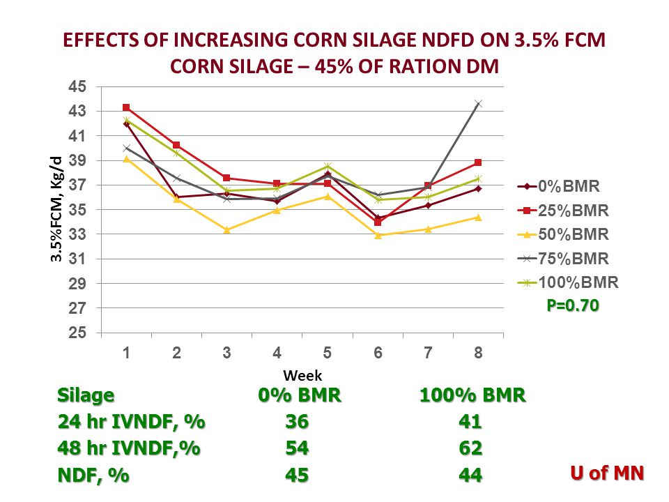 EFFECTS OF INCREASING CORN SILAGE NDFD ON 3.5% FCM CORN SILAGE – 45% OF RATION DM P=0.70 P=0.70 Silage 0% BMR 100% BMR 24 hr IVNDF, % 3641 48 hr IVNDF,% 5462 NDF, % 4544 U of MN
