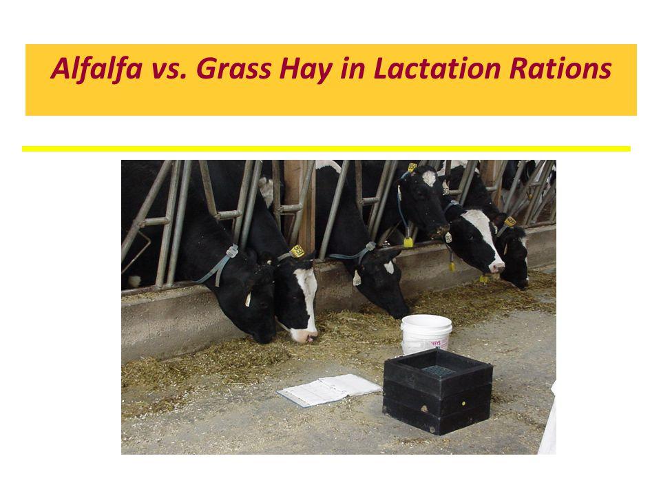 Alfalfa vs. Grass Hay in Lactation Rations
