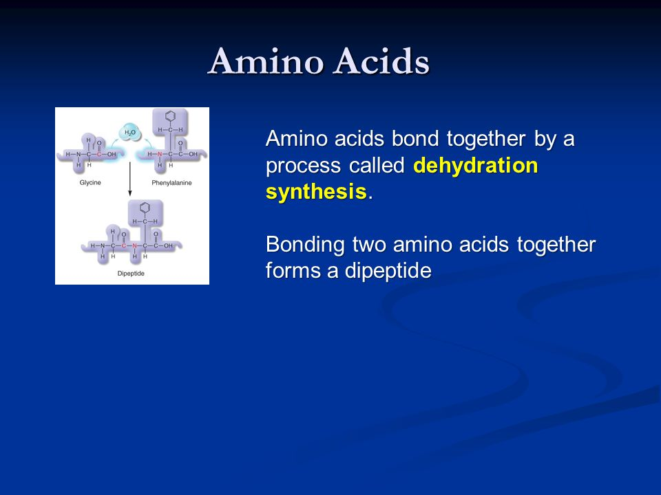 Amino Acids Amino acids bond together by a process called dehydration synthesis.