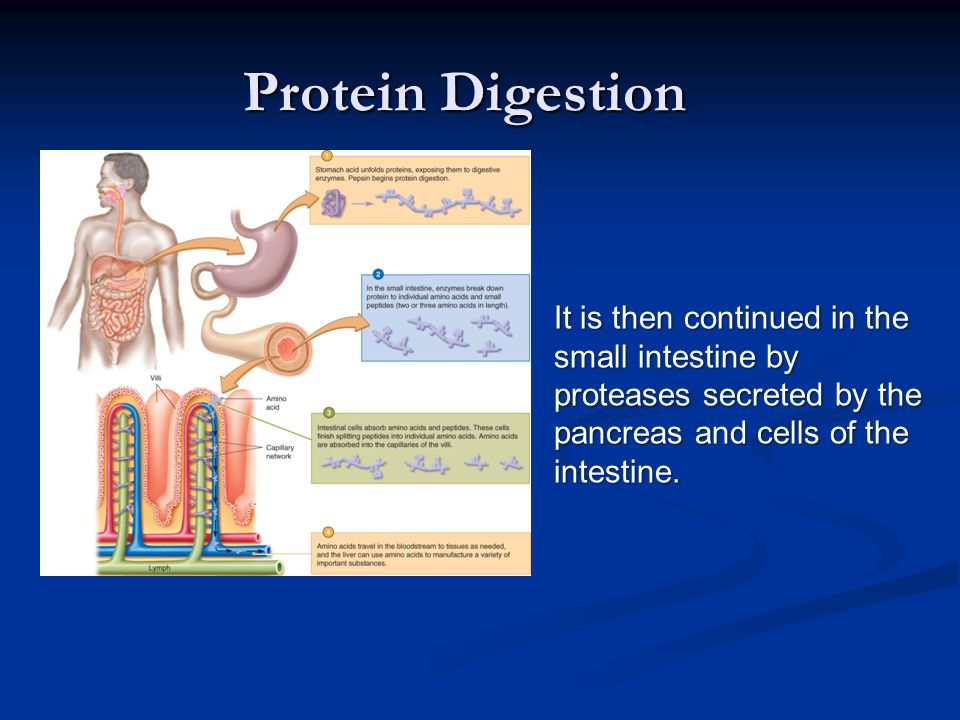 It is then continued in the small intestine by proteases secreted by the pancreas and cells of the intestine.