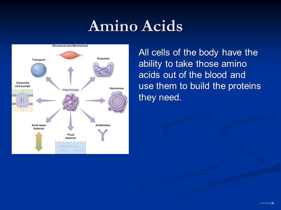 Amino Acids All cells of the body have the ability to take those amino acids out of the blood and use them to build the proteins they need.