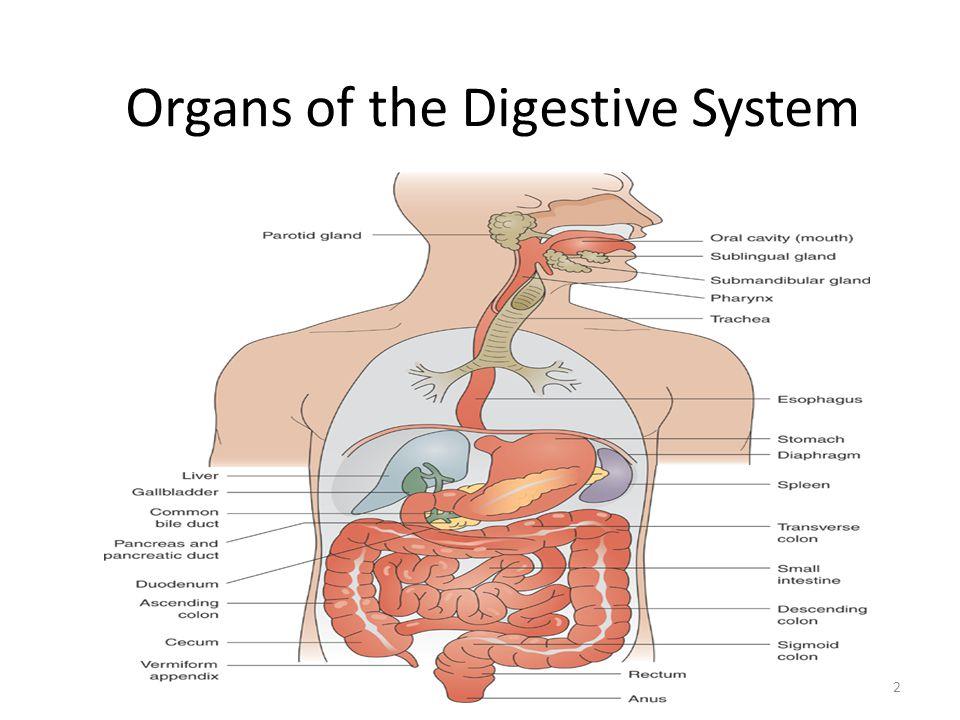 Risk factors diet H.