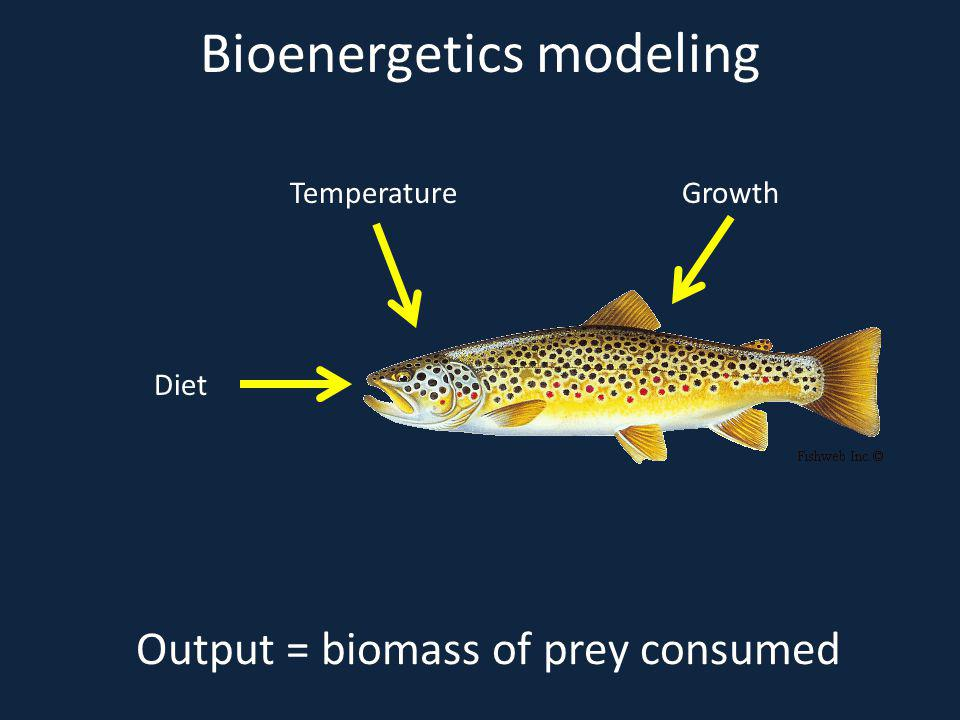 Bioenergetics modeling TemperatureGrowth Diet Output = biomass of prey consumed
