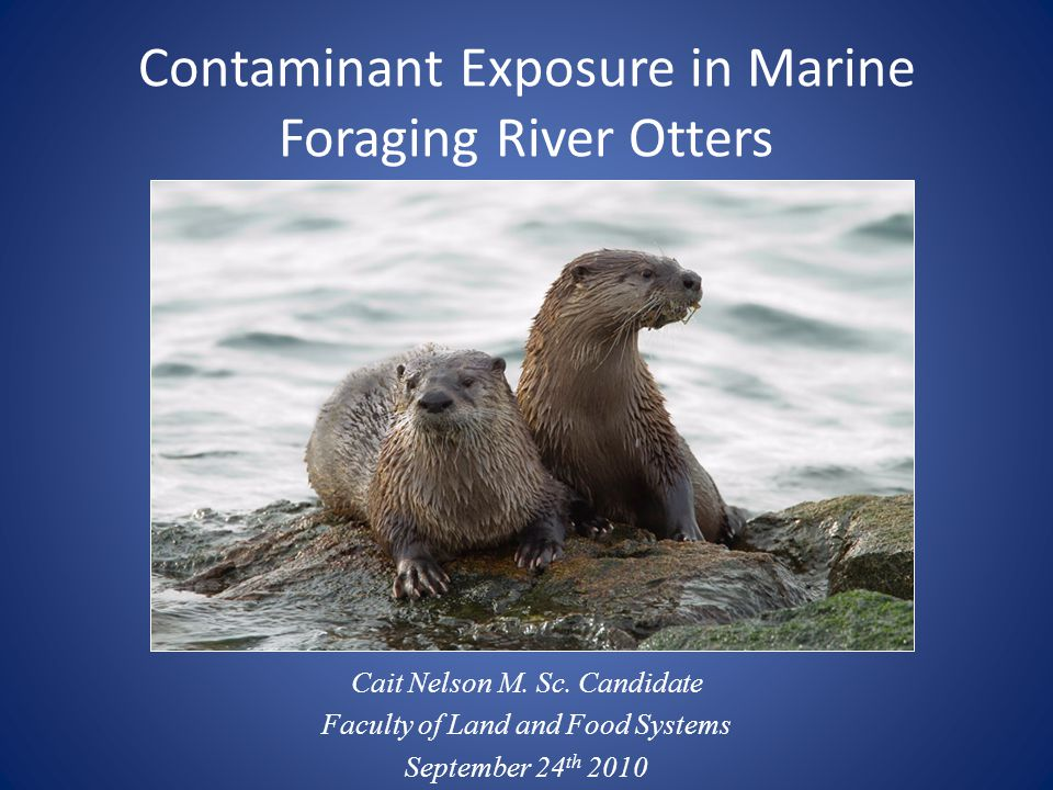 Contaminant Exposure in Marine Foraging River Otters Cait Nelson M.