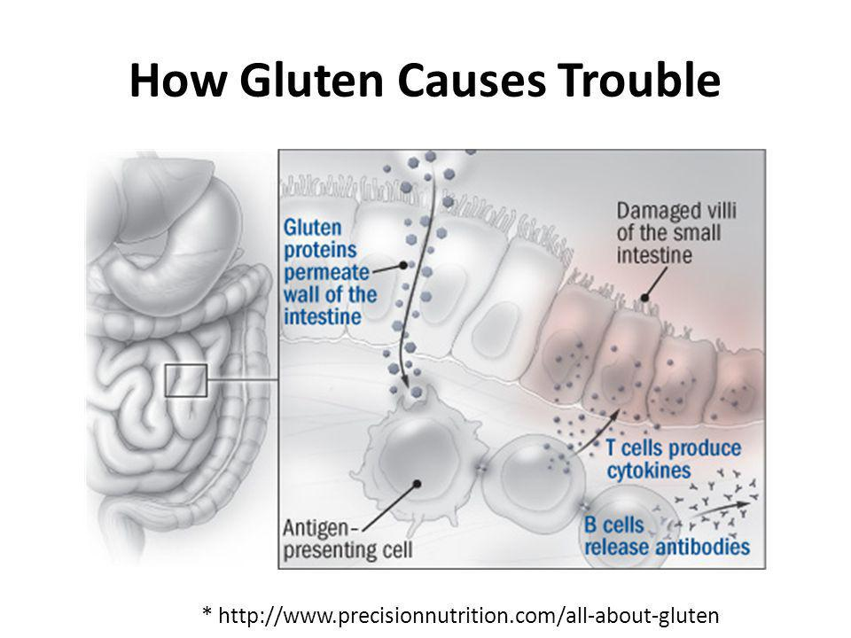 How Gluten Causes Trouble * http://www.precisionnutrition.com/all-about-gluten