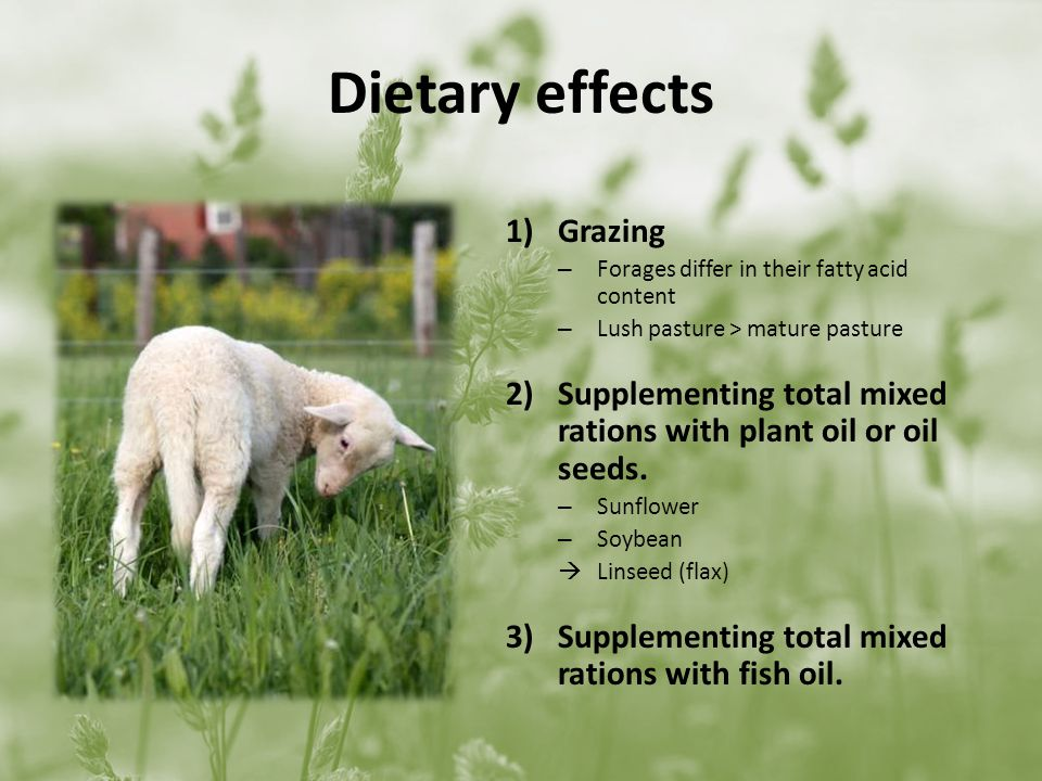 Dietary effects 1)Grazing – Forages differ in their fatty acid content – Lush pasture > mature pasture 2)Supplementing total mixed rations with plant oil or oil seeds.