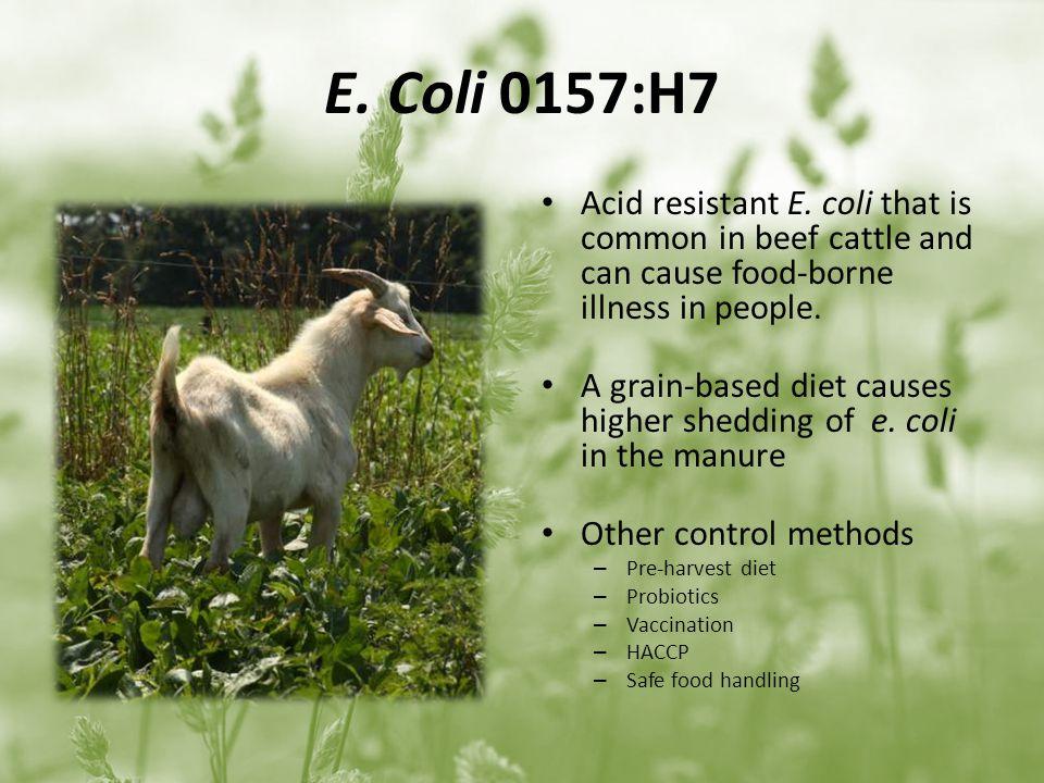 E. Coli 0157:H7 Acid resistant E.