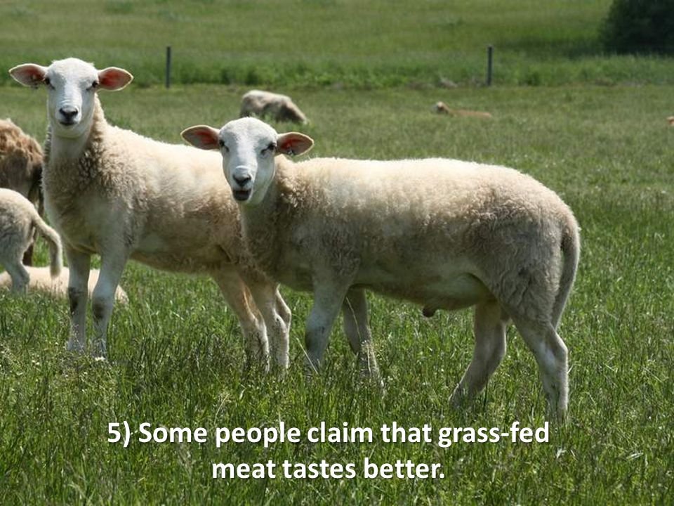 5) Some people claim that grass-fed meat tastes better.