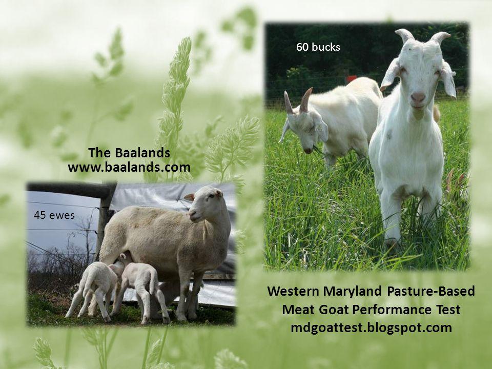 Western Maryland Pasture-Based Meat Goat Performance Test mdgoattest.blogspot.com The Baalands www.baalands.com 60 bucks 45 ewes