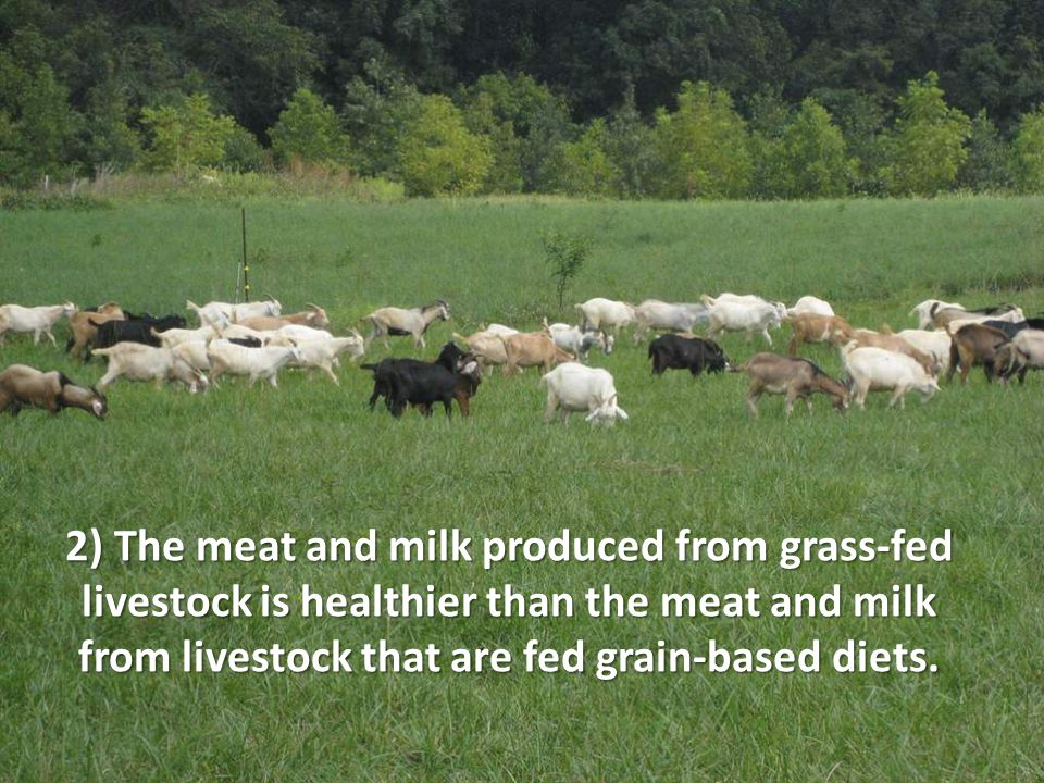 2) The meat and milk produced from grass-fed livestock is healthier than the meat and milk from livestock that are fed grain-based diets.
