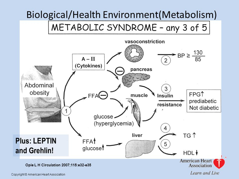 Opie L H Circulation 2007;115:e32-e35 Copyright © American Heart Association Biological/Health Environment(Metabolism) Plus: LEPTIN and Grehlin!