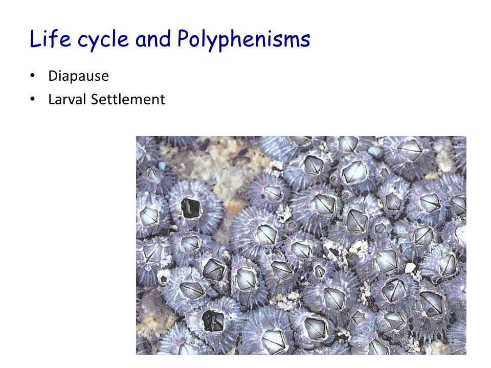 Life cycle and Polyphenisms Diapause Larval Settlement