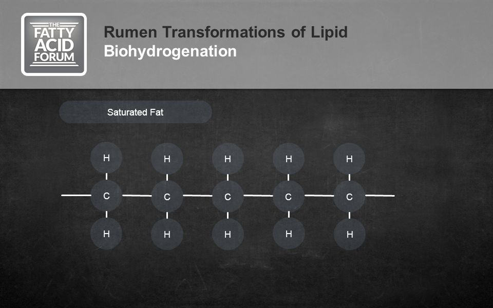 Rumen Transformations of Lipid Biohydrogenation Saturated Fat H C H C H H H C H H C H C H H