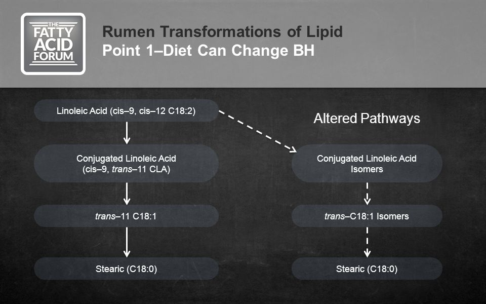 Rumen Transformations of Lipid Point 1–Diet Can Change BH Linoleic Acid (cis–9, cis–12 C18:2) Conjugated Linoleic Acid (cis–9, trans–11 CLA) trans–11