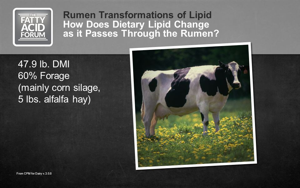 Rumen Transformations of Lipid How Does Dietary Lipid Change as it Passes Through the Rumen? 47.9 lb. DMI 60% Forage (mainly corn silage, 5 lbs. alfal