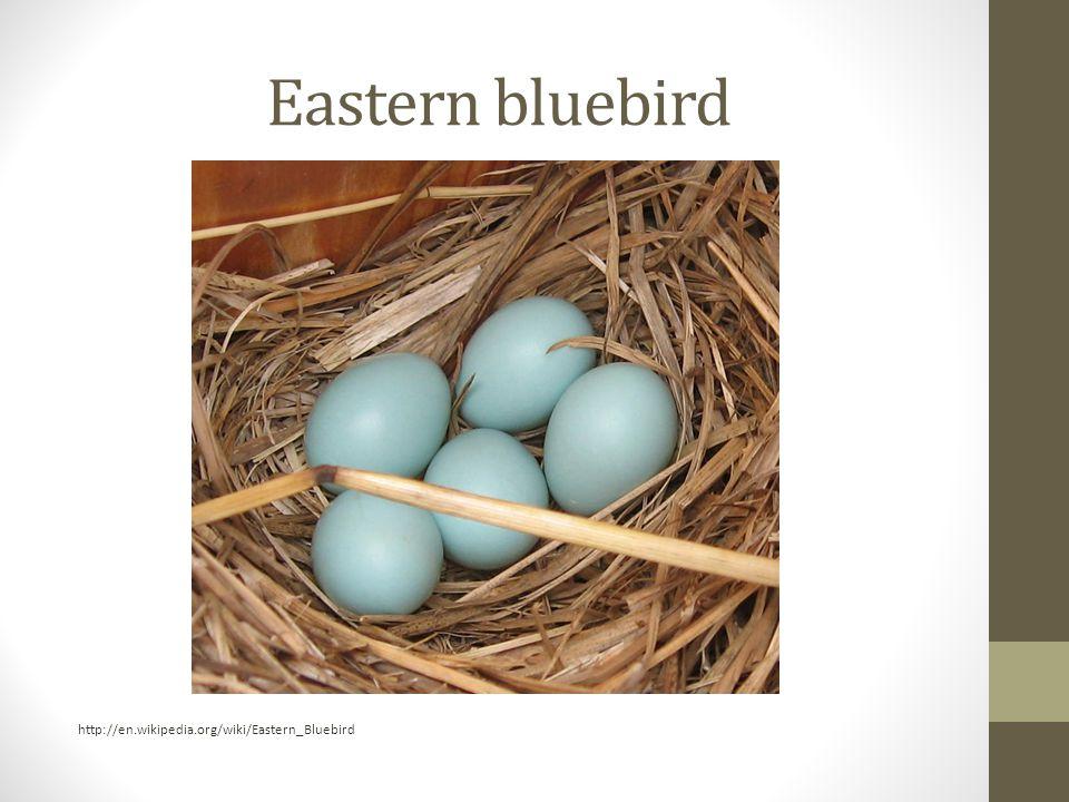 Eastern bluebird http://en.wikipedia.org/wiki/Eastern_Bluebird