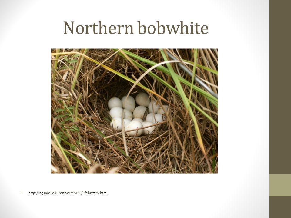 Northern bobwhite http://ag.udel.edu/enwc/MABCI/lifehistory.html