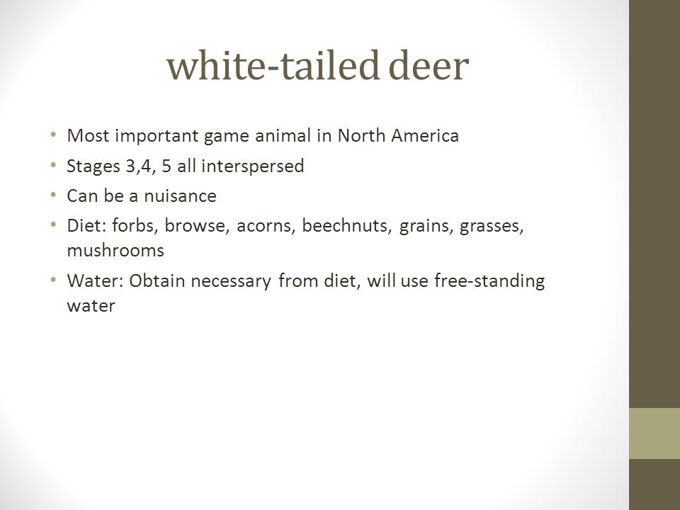 white-tailed deer Most important game animal in North America Stages 3,4, 5 all interspersed Can be a nuisance Diet: forbs, browse, acorns, beechnuts, grains, grasses, mushrooms Water: Obtain necessary from diet, will use free-standing water