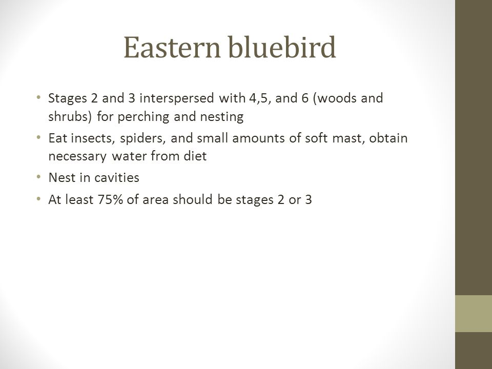Eastern bluebird Stages 2 and 3 interspersed with 4,5, and 6 (woods and shrubs) for perching and nesting Eat insects, spiders, and small amounts of soft mast, obtain necessary water from diet Nest in cavities At least 75% of area should be stages 2 or 3