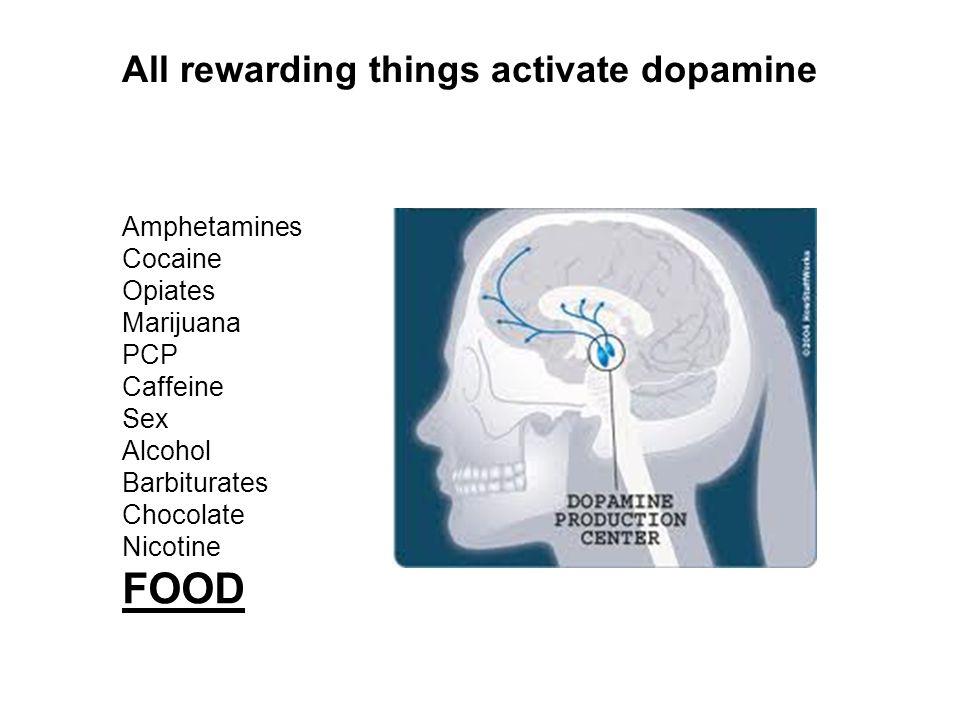 Amphetamines Cocaine Opiates Marijuana PCP Caffeine Sex Alcohol Barbiturates Chocolate Nicotine FOOD All rewarding things activate dopamine