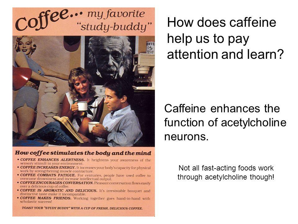 Caffeine enhances the function of acetylcholine neurons.