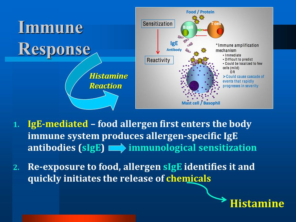 1. IgE-mediated – food allergen first enters the body immune system produces allergen-specific IgE antibodies (sIgE) immunological sensitization 2. Re