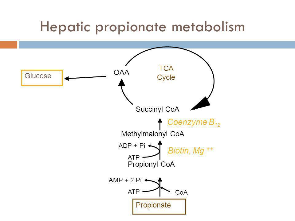 Hepatic propionate metabolism Glucose Propionate Propionyl CoA Methylmalonyl CoA Succinyl CoA OAA TCA Cycle Coenzyme B 12 Biotin, Mg ++ ATP AMP + 2 Pi