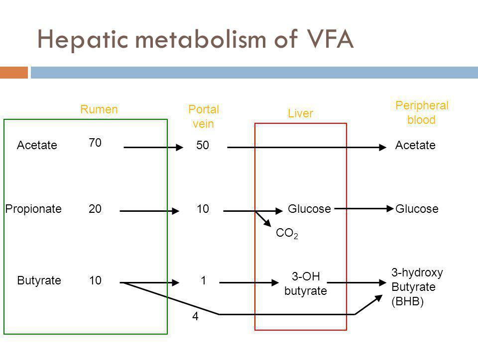 Hepatic metabolism of VFA RumenPortal vein Acetate Propionate Butyrate 50 Glucose 3-hydroxy Butyrate (BHB) 70 20 10 1 Liver 3-OH butyrate Acetate Peri