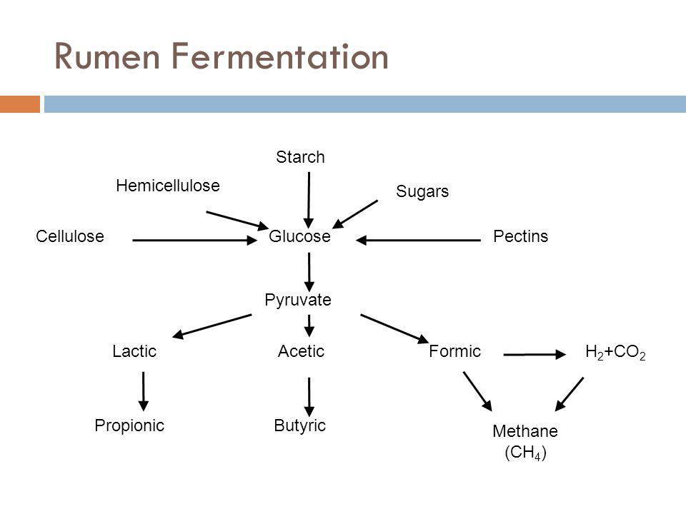 Rumen Fermentation Cellulose Glucose Pyruvate Hemicellulose Starch Sugars Pectins LacticAceticFormicH 2 +CO 2 ButyricPropionic Methane (CH 4 )