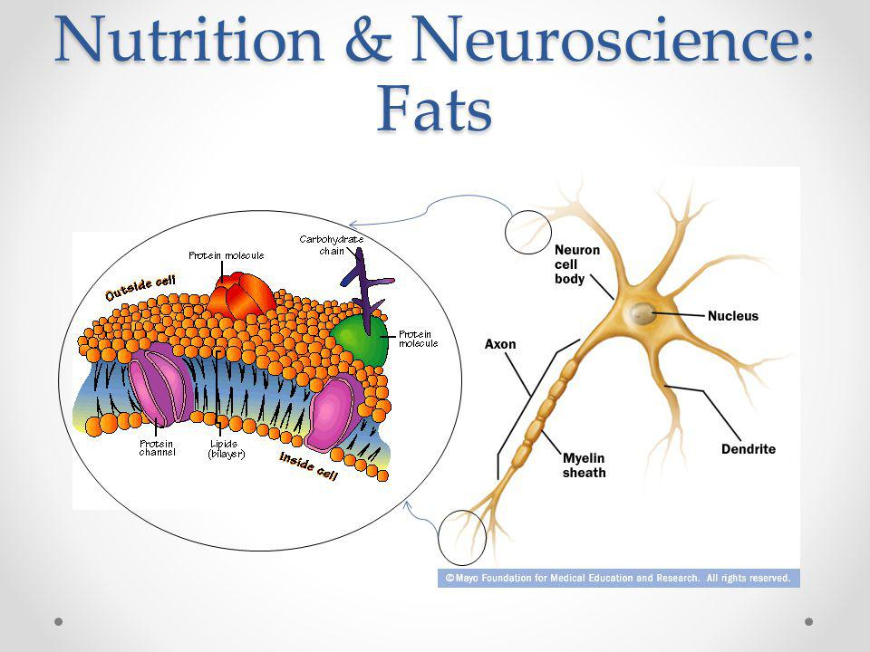 Nutrition & Neuroscience: Fats