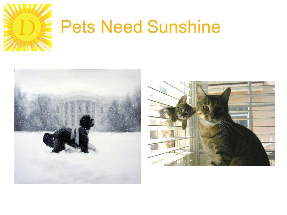 D Pets Need Sunshine