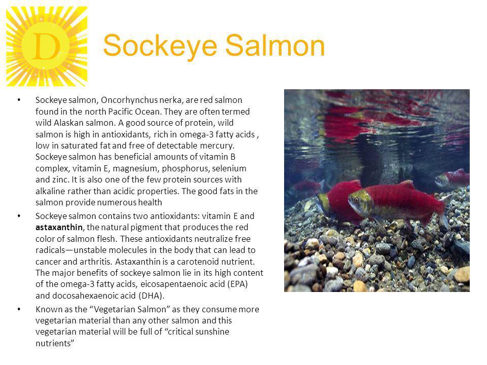 D Sockeye Salmon Sockeye salmon, Oncorhynchus nerka, are red salmon found in the north Pacific Ocean. They are often termed wild Alaskan salmon. A goo