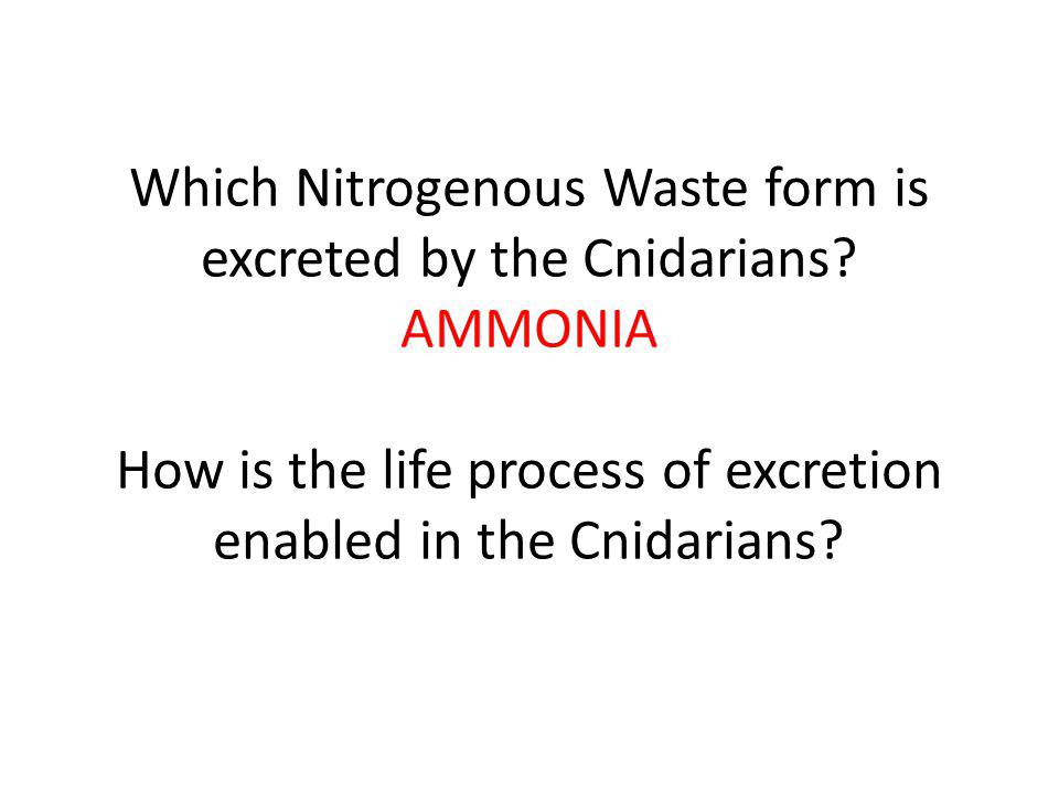 Which Nitrogenous Waste form is excreted by the Cnidarians.
