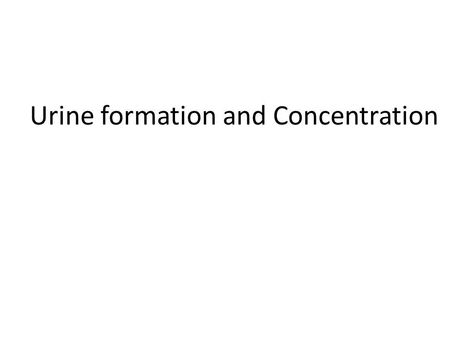 Urine formation and Concentration