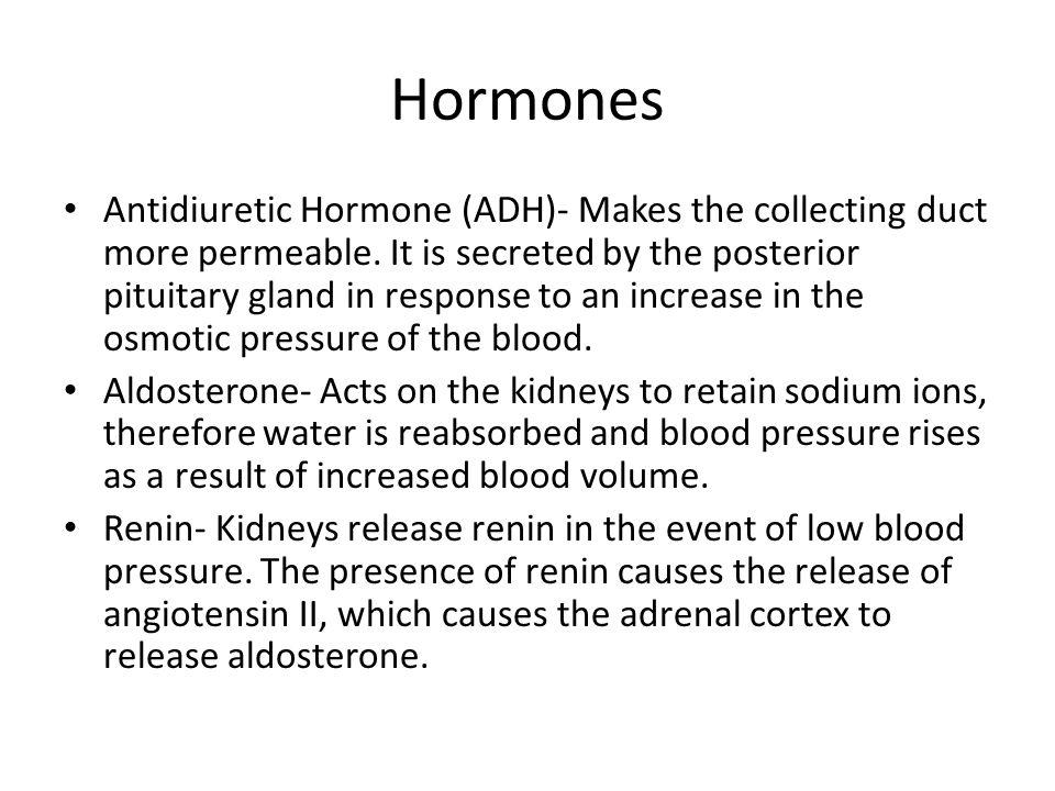 Hormones Antidiuretic Hormone (ADH)- Makes the collecting duct more permeable.