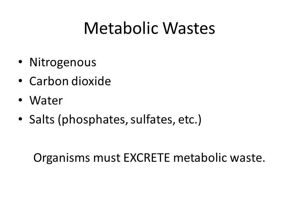 Metabolic Wastes Nitrogenous Carbon dioxide Water Salts (phosphates, sulfates, etc.) Organisms must EXCRETE metabolic waste.