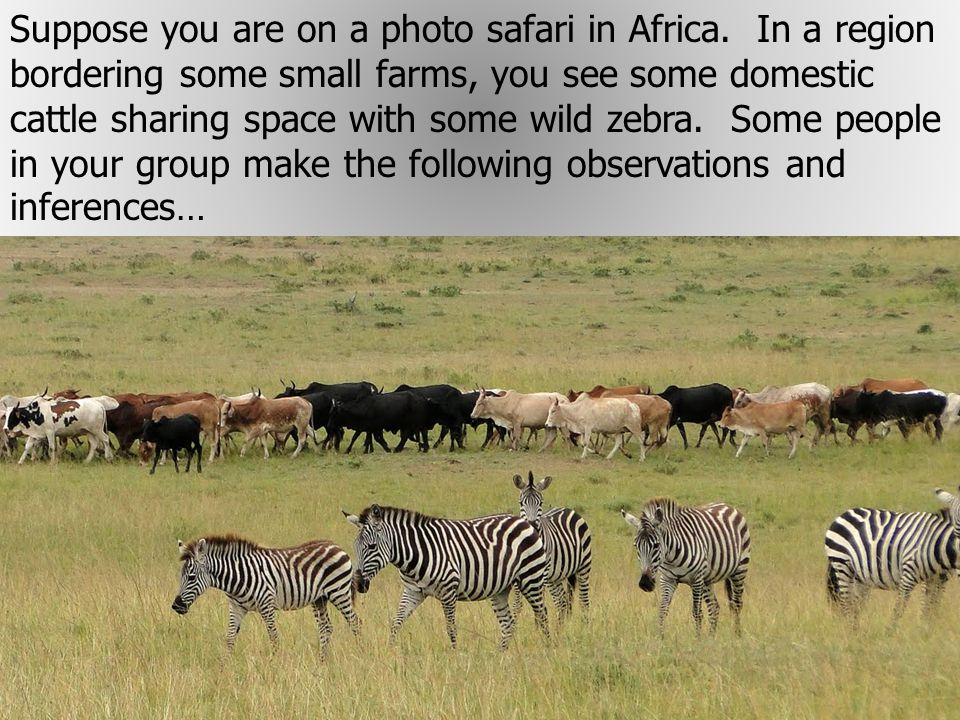Suppose you are on a photo safari in Africa.