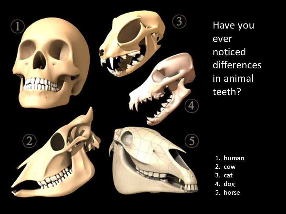 1. human 2. cow 3. cat 4. dog 5. horse Have you ever noticed differences in animal teeth?