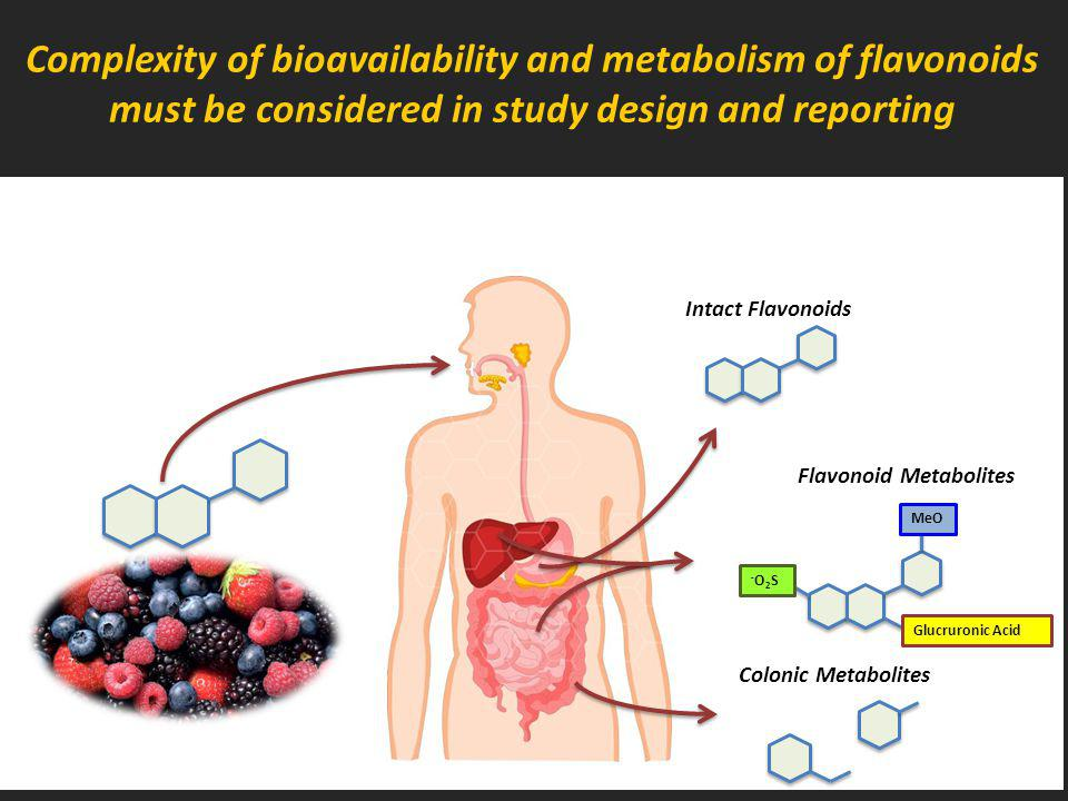 Complexity of bioavailability and metabolism of flavonoids must be considered in study design and reporting Intact Flavonoids MeO Glucruronic Acid -O2S-O2S Flavonoid Metabolites Colonic Metabolites